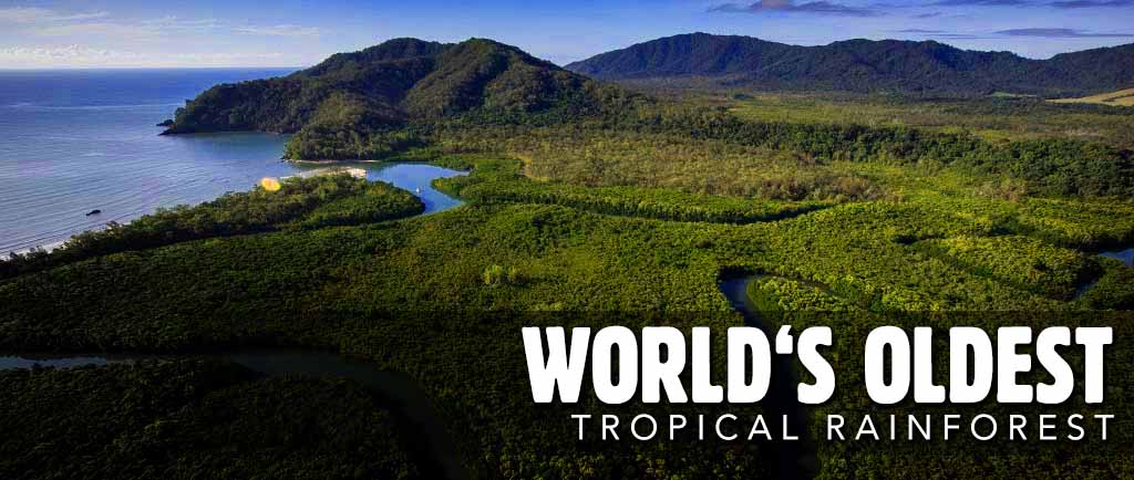 Discover the Daintree - the World's oldest tropical rainforest.